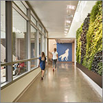 Students in hallway with living wall, link to larger image